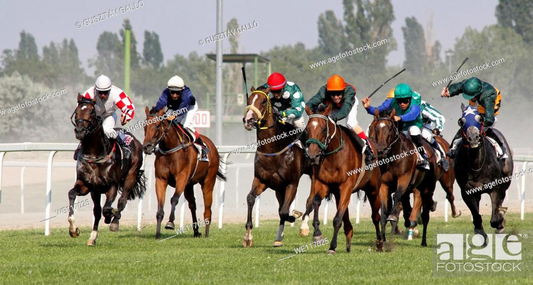 Stock Photo: Horse racing, in Budapest, Hungary.
