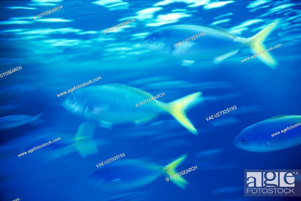 Stock Photo: Fish.