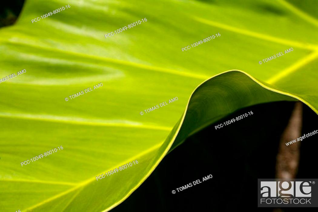 Stock Photo: Close-up of a green leaf, edge of leaf contrasting against a dark background.