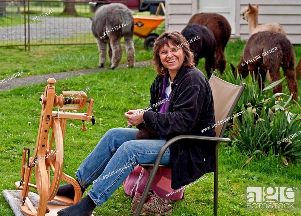 Stock Photo: This rural lifestyle photo depicts a Caucasian woman enjoying farm life by spinning alpaca fiber into thread on a manual spinning wheel The alpacas are grazing.