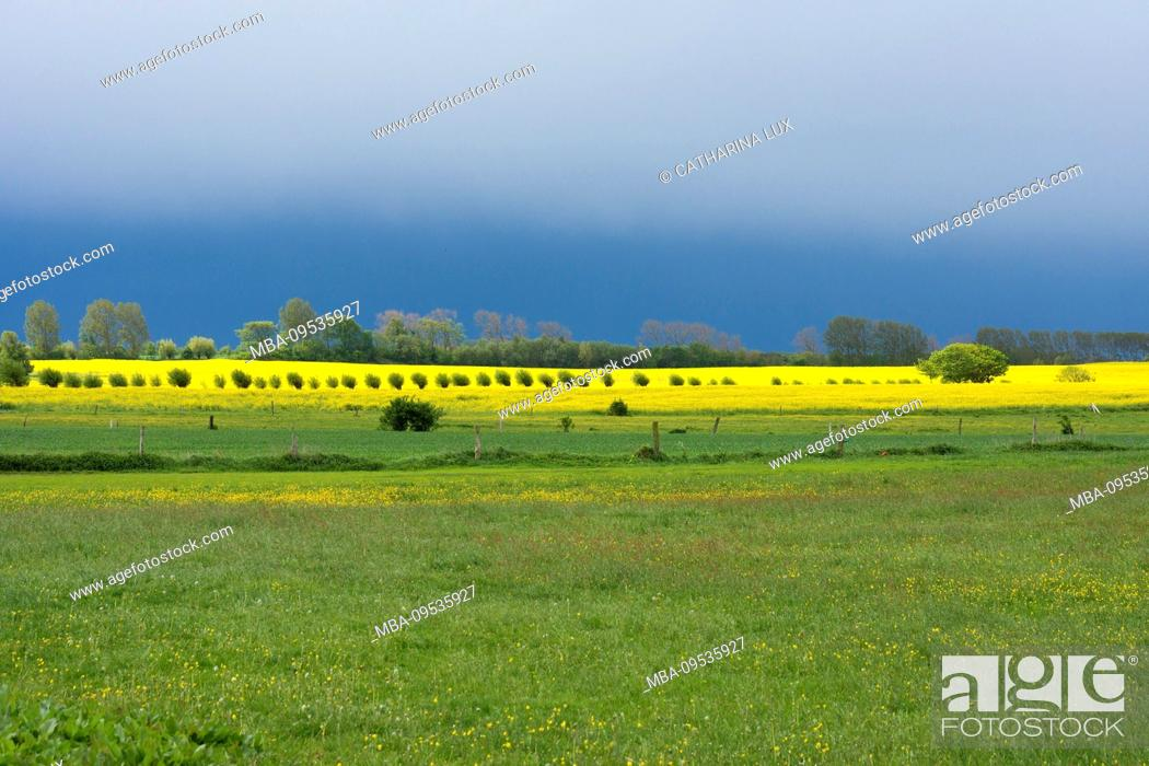 Stock Photo: Fischland-Darss, landscape between Ahrenshoop and Wustrow, thunderstorm mood, pollard willow, copy space.