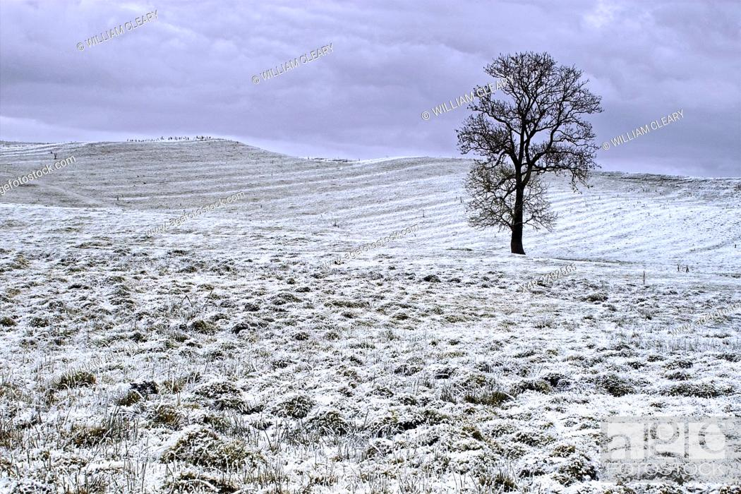 Stock Photo: A lone tree in a frozen landscape, County Westmeath, Ireland.