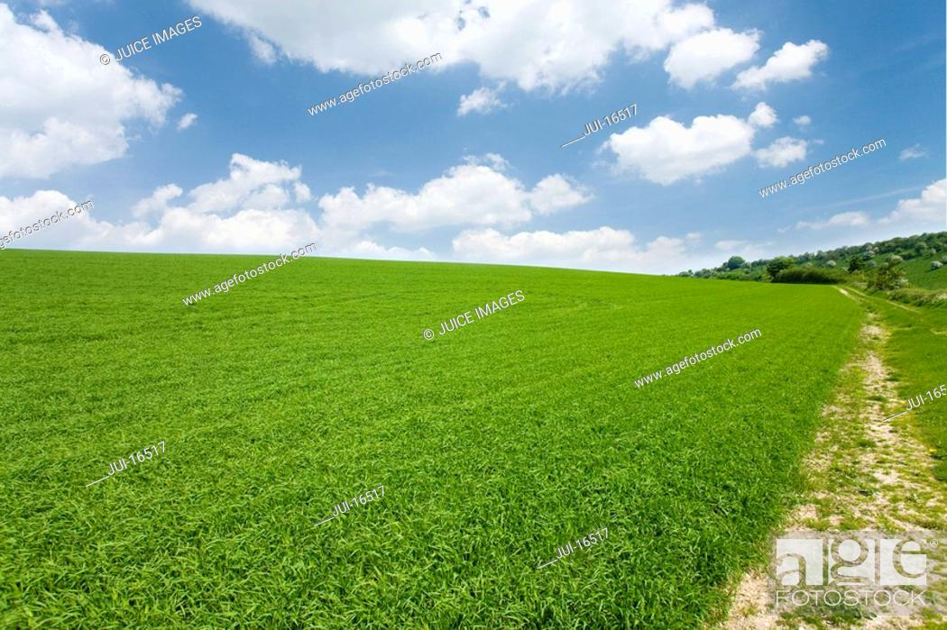 Stock Photo: Path through field of grass and cloudy sky.