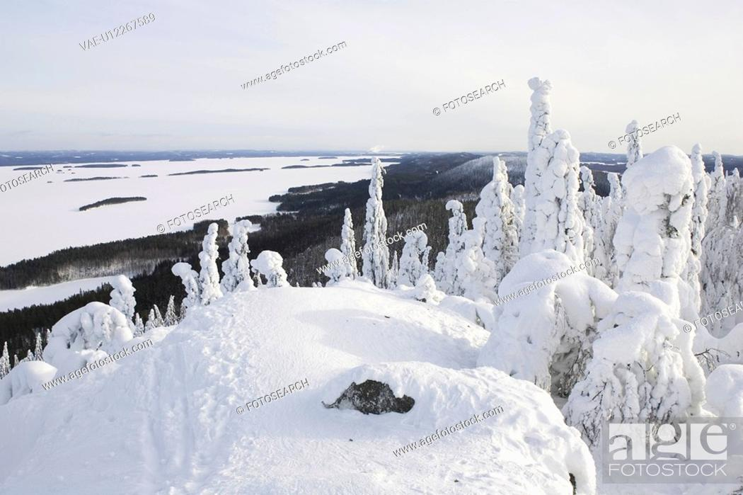 Stock Photo: Covering, Day, Distant, Evergreen Tree, Forest.