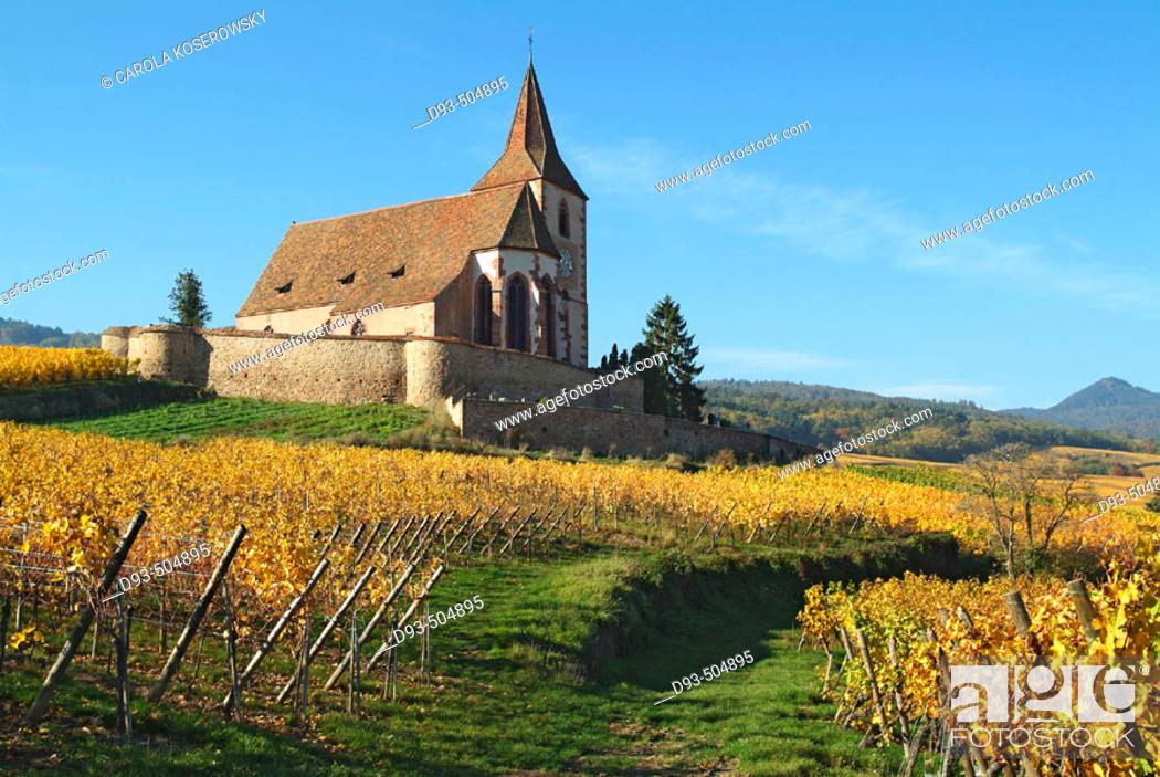 Stock Photo: Hunawihr. Alsatian Wine Road. France.
