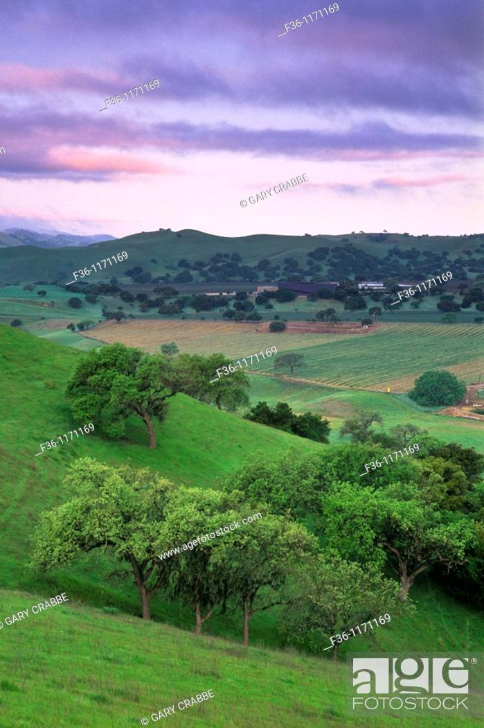 Stock Photo: Green hills in spring and fog at sunset along Foxen Canyon Road, Santa Barbara County, California.