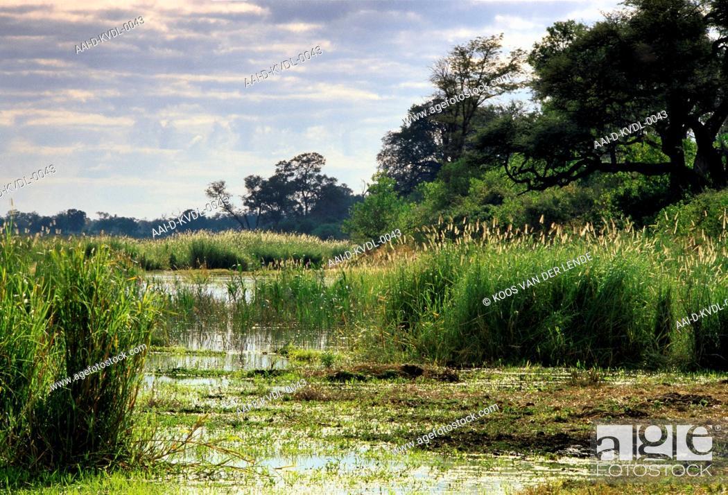 Stock Photo: Linyanti River; Botswana.