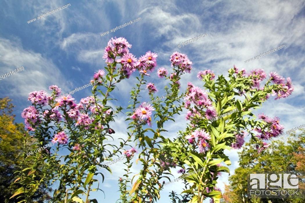 Stock Photo: Flowers bloom.