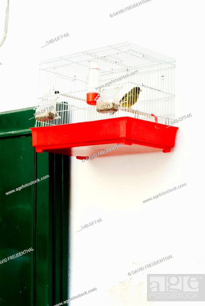 Stock Photo: Bird in a cage.