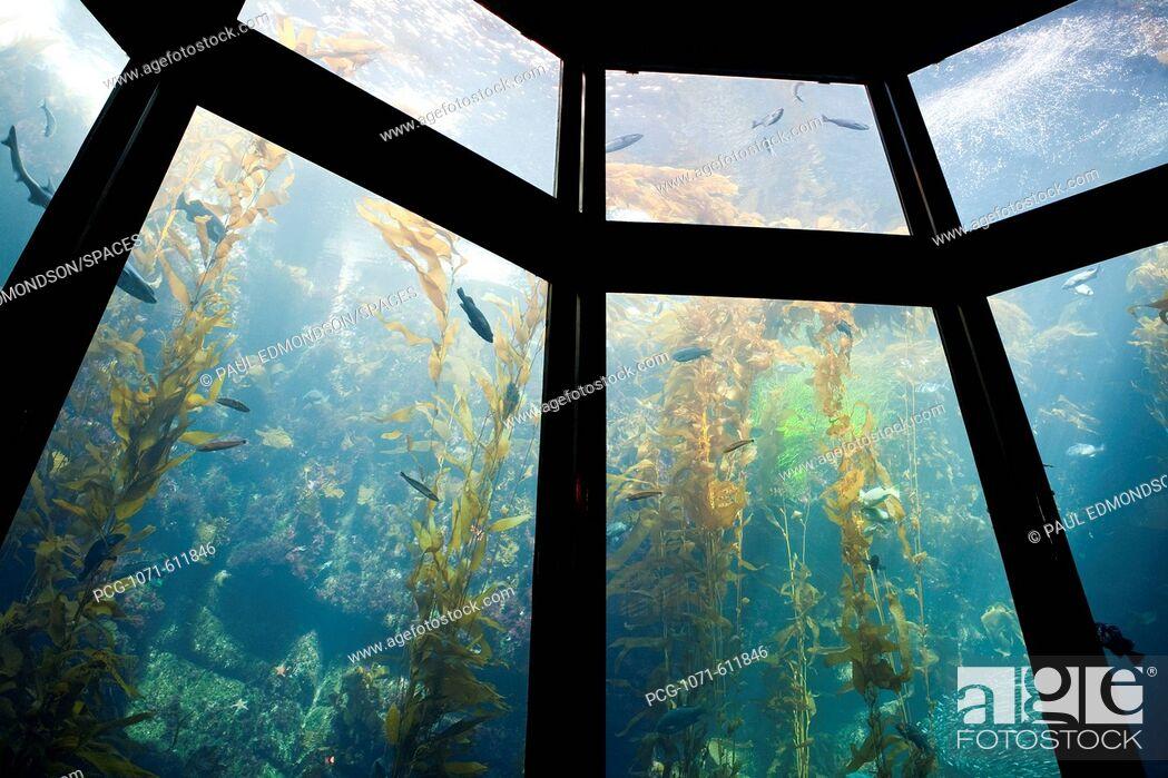 Stock Photo: Monterey Bay Aquarium, Monterey, California, CA.