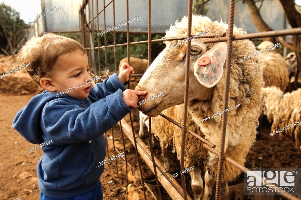 Stock Photo: Toddler with a sheep at a petting corner in a children's zoo.
