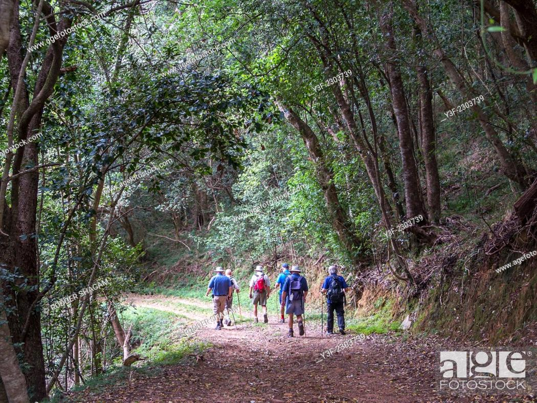 Stock Photo: A group of men on a forest hiking trail. Cape Town, South Africa.