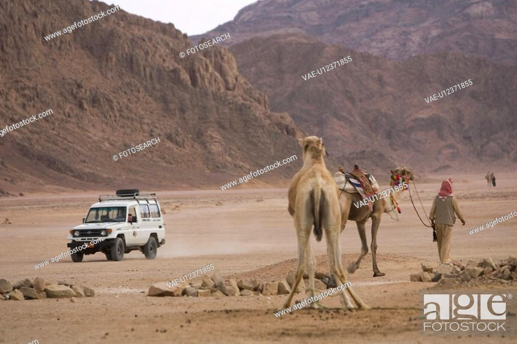 Stock Photo: Barren, Casual Clothing, Car, Camel, Arid Climate.