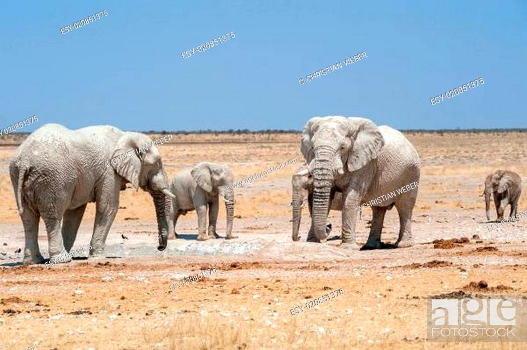 Stock Photo: elefanten an wasserloch etosha nationalpark namibia.