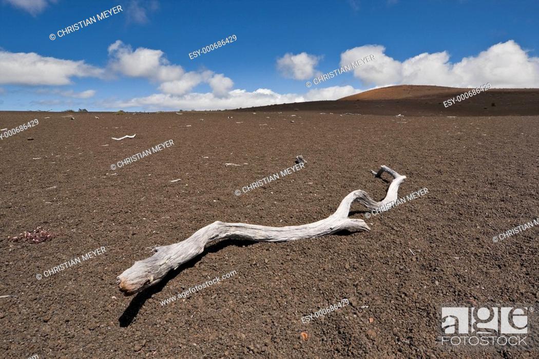 Imagen: Devastation Trail II.