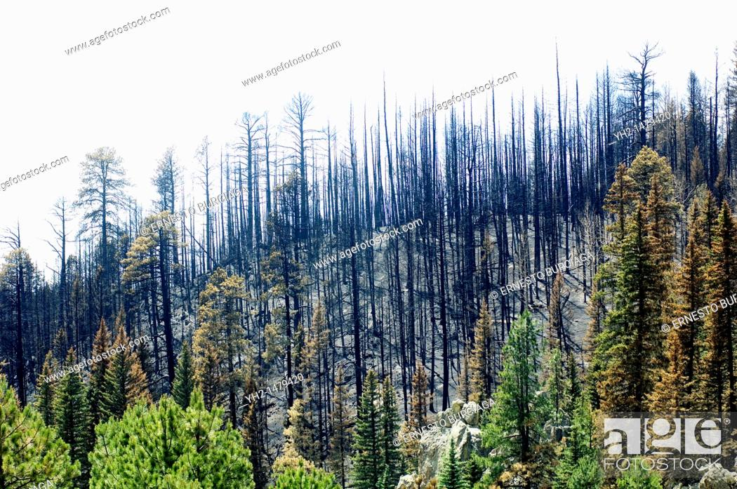 Stock Photo: Las Conchas forest fire damage.