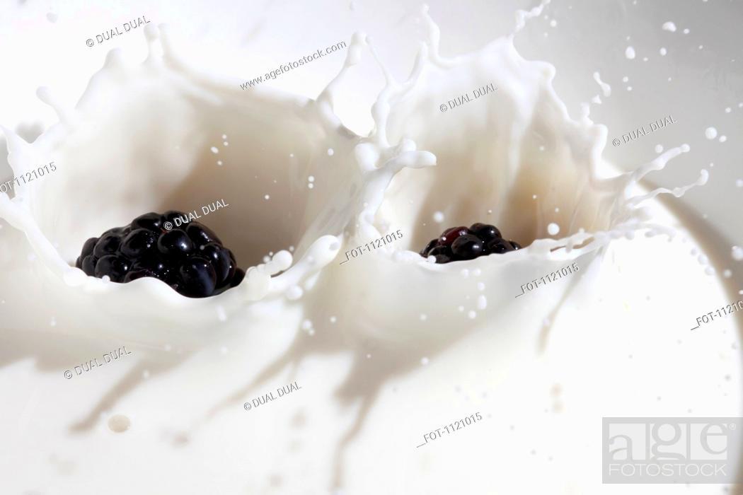 Stock Photo: Blackberries falling into milk.
