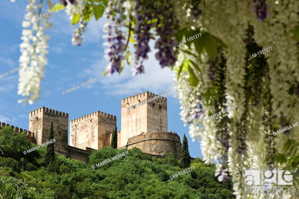 Stock Photo: Alhambra, Alcazaba, view through flowering Wisteria from 'Carrera Del Darro', Granada, Andalucia, Spain.