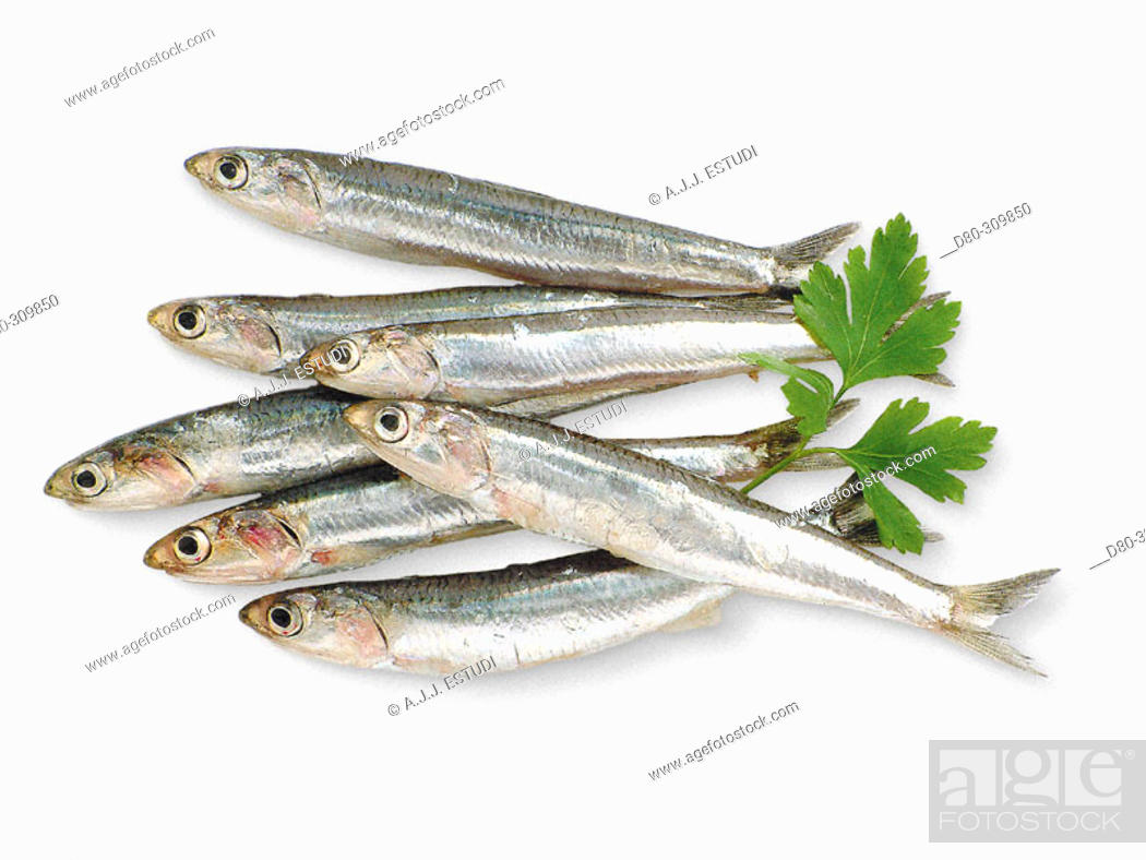 Stock Photo: Anchovies.