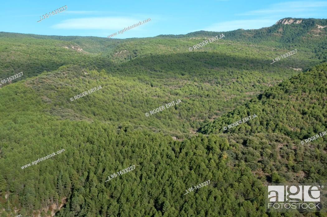 Stock Photo: Green oak forest Mediterranean landscape, Lleida, Spain.