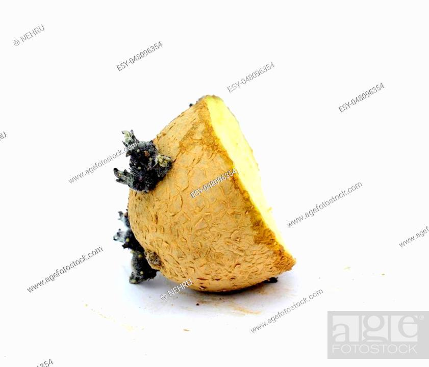 Stock Photo: old sprouting baking potato, isolated on white, image.