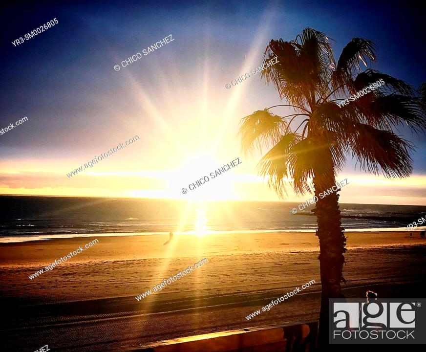 Stock Photo: A palm tree at sunset in the beach in Chipiona, Cadiz, Andalucia, Spain.