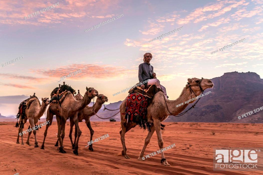 Stock Photo: Bedouin with camels in the desert Wadi Rum, Jordan.
