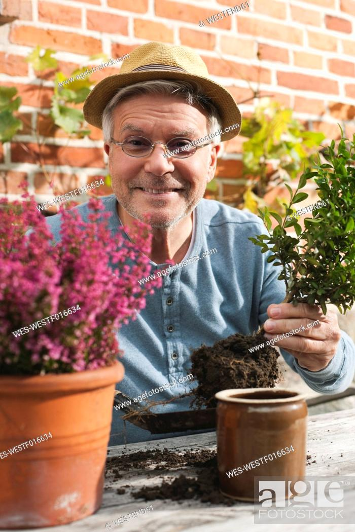 Stock Photo: Germany, Kratzeburg, Senior man doing flower gardening.