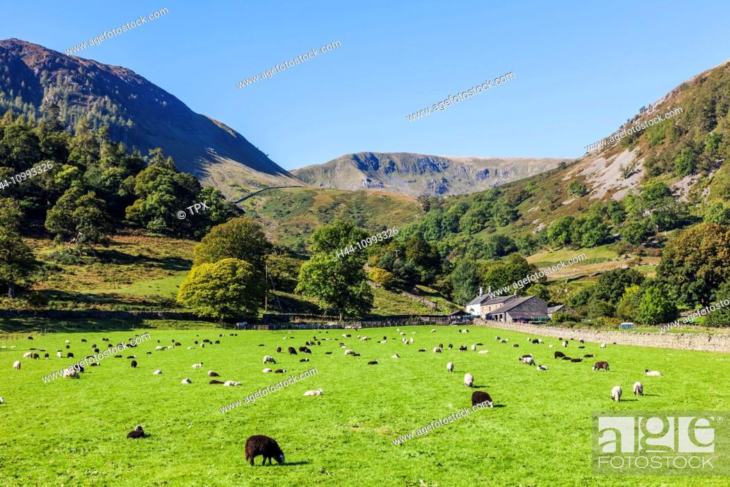 Stock Photo: England, Cumbria, Lake District, Ullswater, Farm at Glenridding.