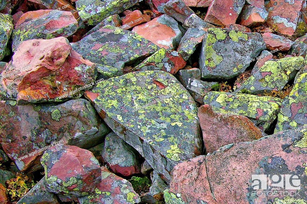 Imagen: map lichen (Rhizocarpon geographicum), on rocks.