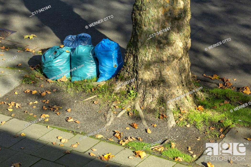 Imagen: Oberhausen, Sterkrade, plastic bags at the roadside near a plane tree, binbags with autumn leaves, refuse management, trash removal, street cleaning.
