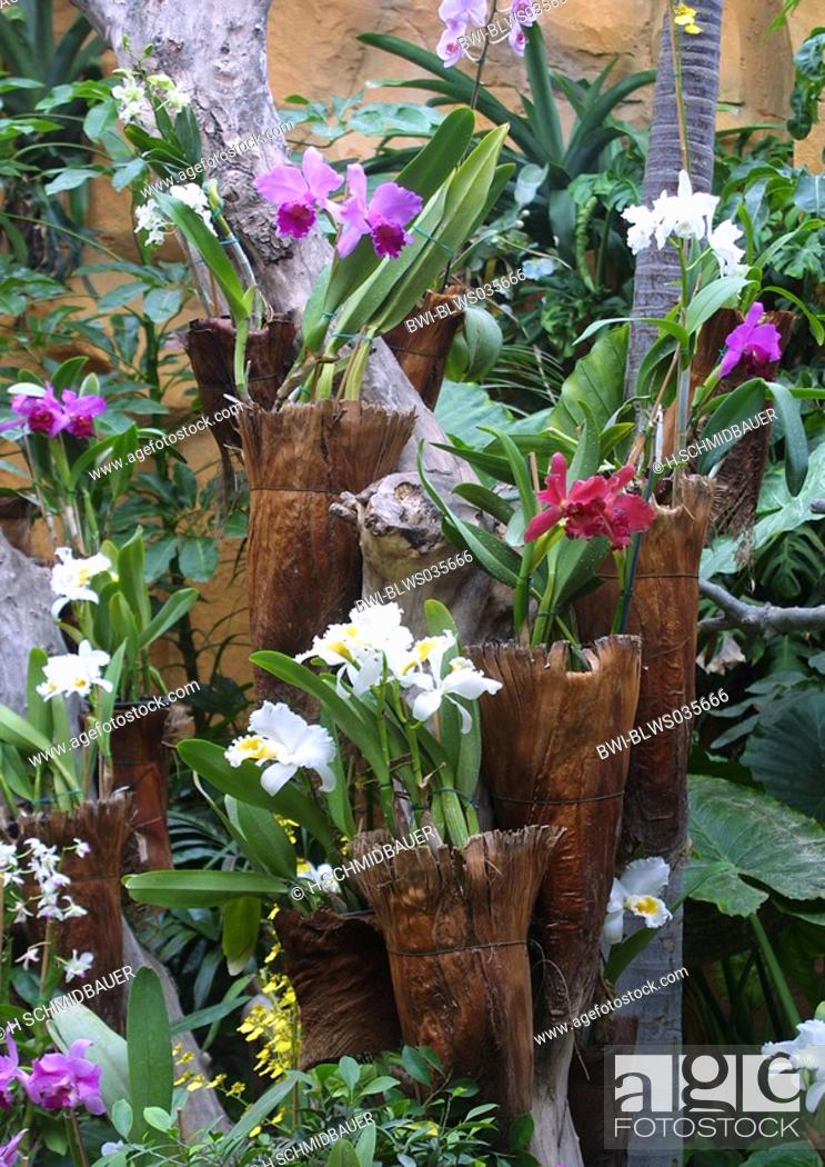 Stock Photo: greenhouse with different orchid-species.