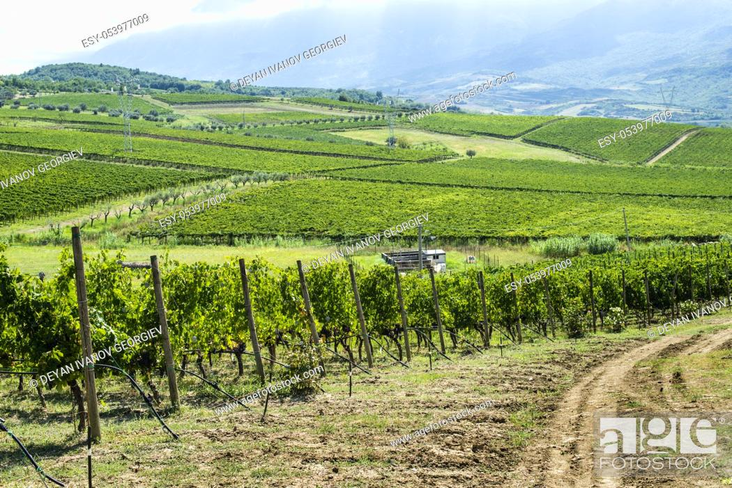 Stock Photo: Vineyards on hill in a row. Winery in valley.