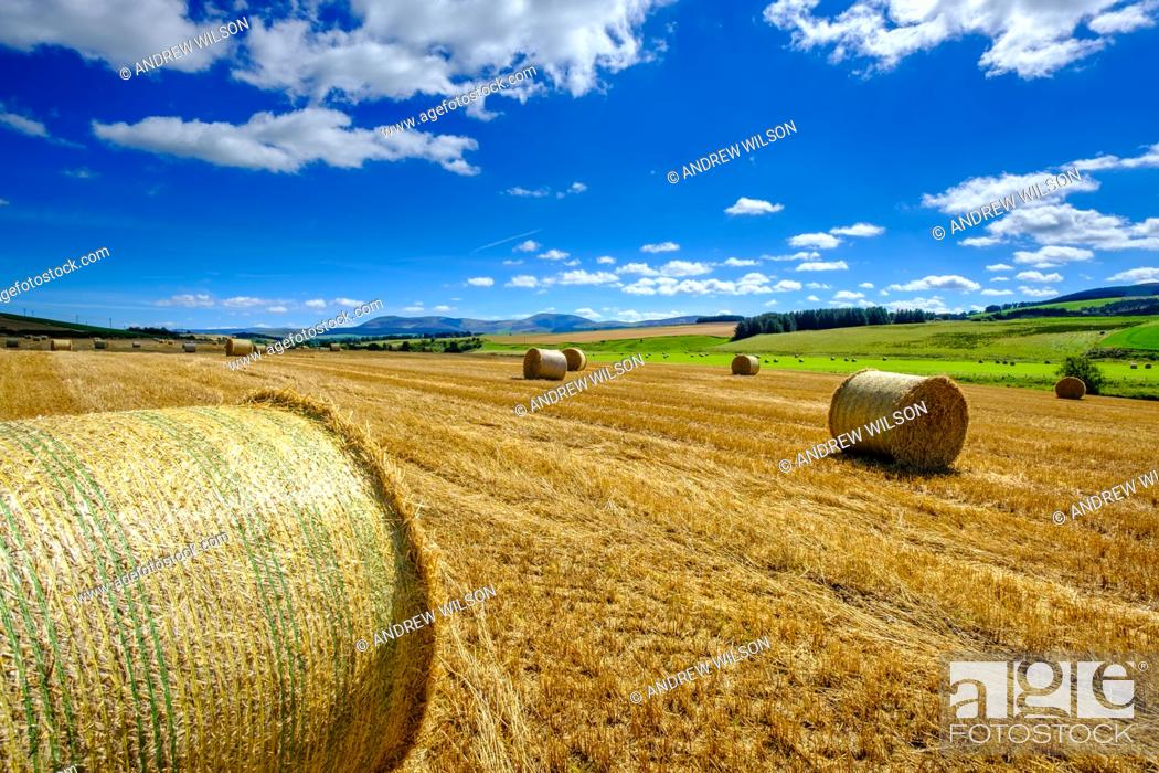 Stock Photo: Straw Bales in a field in South Lanarkshire, Scotland near the village of Thankerton.