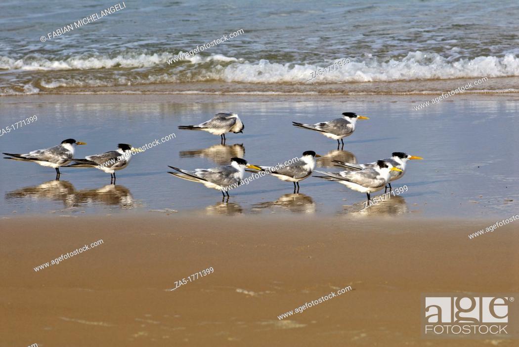 Imagen: Terns siiting on Seventy Five Mile Beach  Fraser Island, Great Sandy National Park, Queensland, Australia.