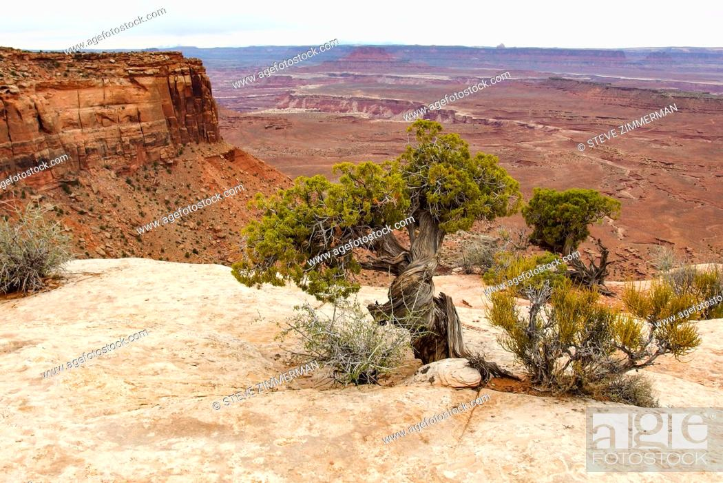 Imagen: Above the Canyon. Canyonlands National Park, Utah, USA.