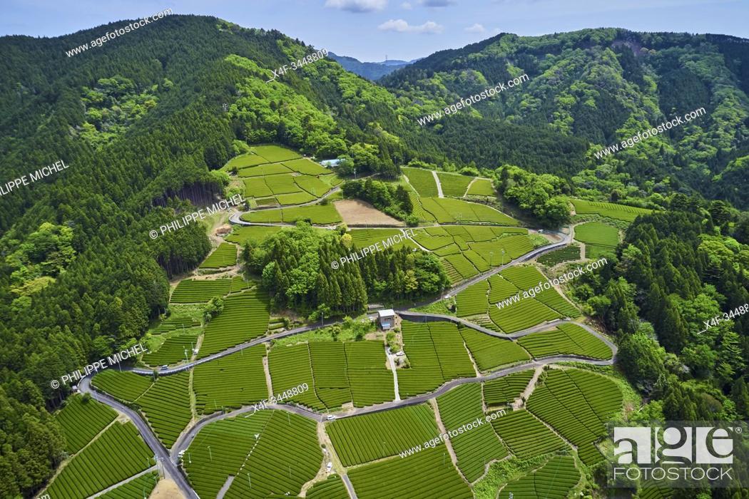 Stock Photo: Japan, Honshu, Shizuoka, tea fields.