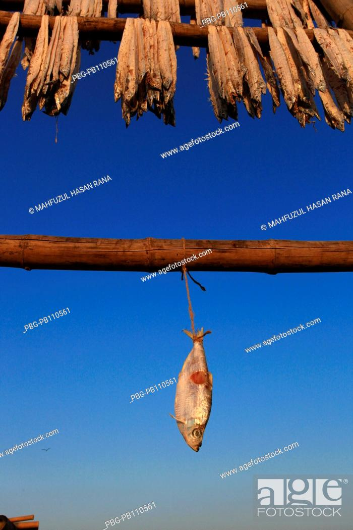 Stock Photo: Fishes are placed on the fence for sun drying Cox's Bazar, Bangladesh March 2011.