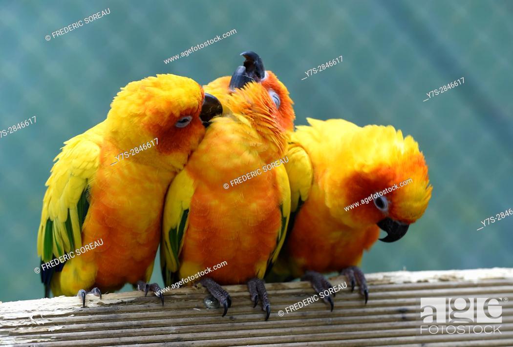 Stock Photo: Parrots in Hallim Park, Jeju island, South Korea.