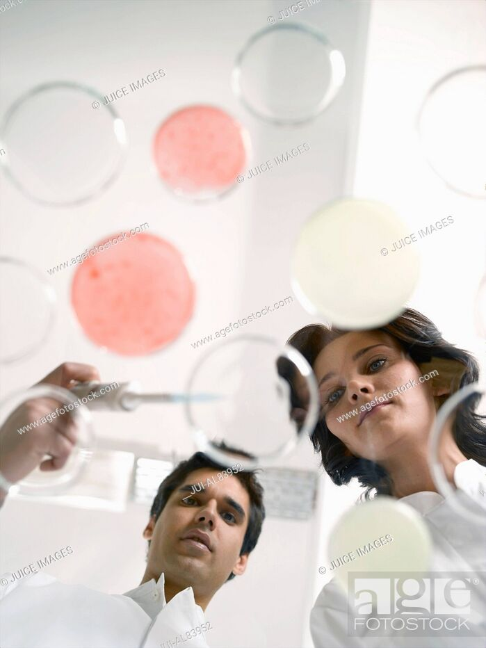 Stock Photo: Low angle view of scientists testing liquid in Petri dish.