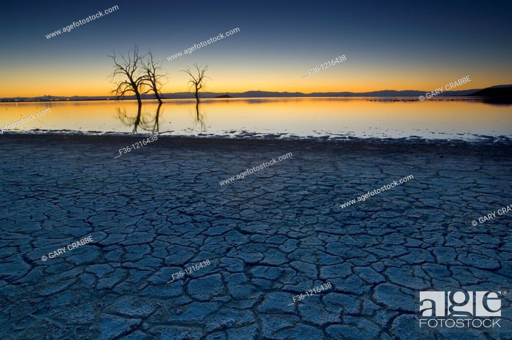 Stock Photo: Dry cracked mud shoreline and barren trees in evening light at the Salton Sea, Imperial Valley, California.