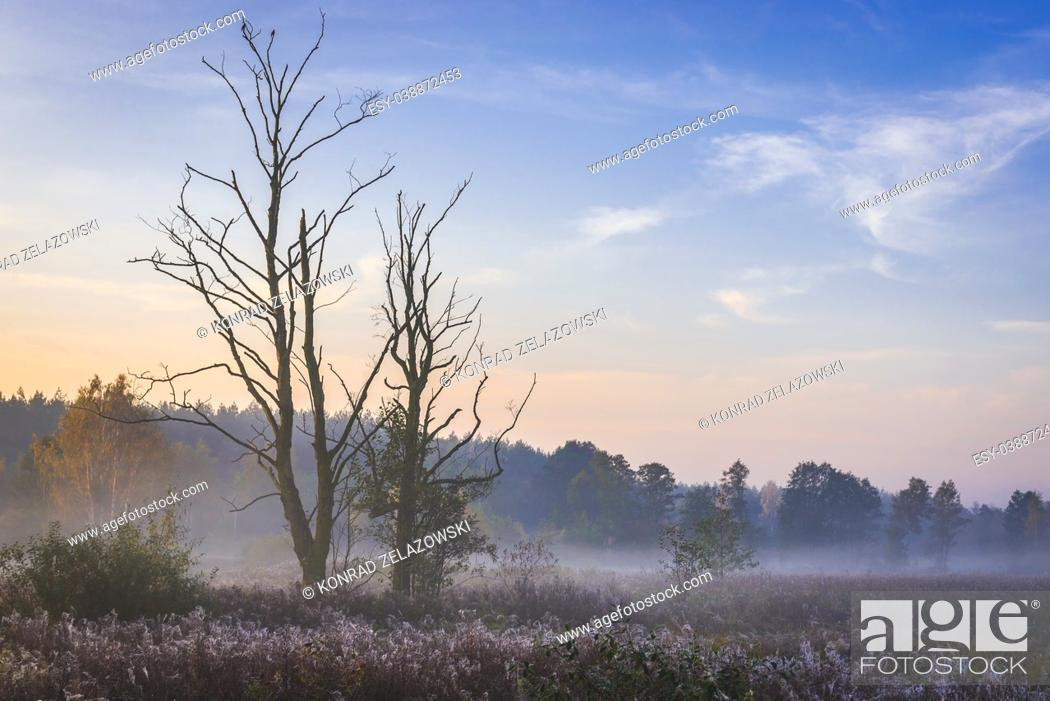 Stock Photo: Morning view of a meadow in Gorki village, Sochaczew County on the edge of Kampinos Forest, large forests complex in Masovian Voivodeship of Poland.