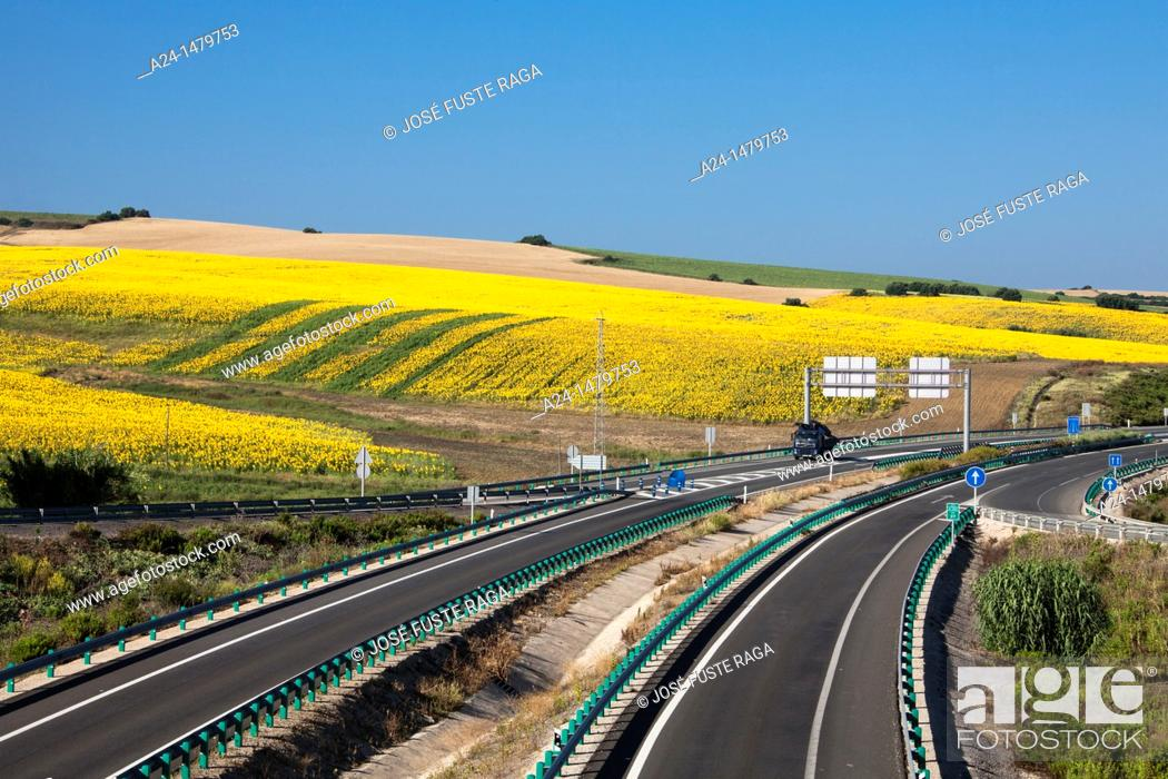 Stock Photo: Spain, Spring 2011, Andalucia, Highway and Sunflowers fields.