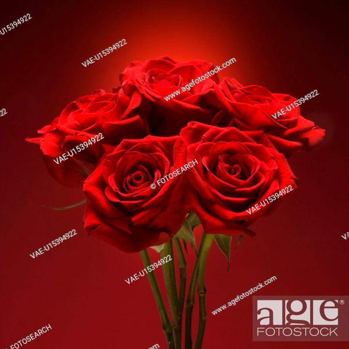 Stock Photo: Bouquet of red roses against red background.
