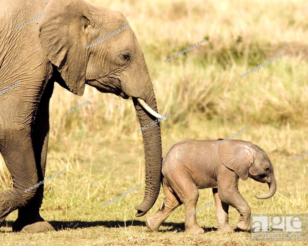 Stock Photo: Mother and Baby African Elephant - Masai Mara National Reserve, Kenya.