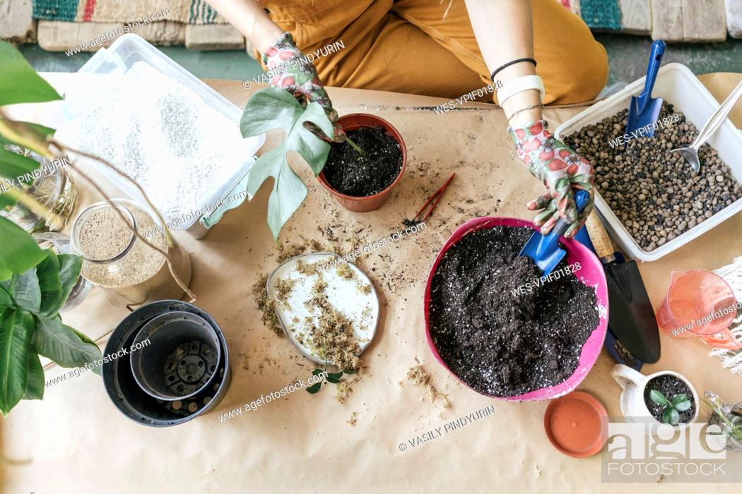 Stock Photo: Top view of woman working with soil on table.