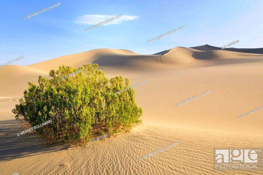 Stock Photo: Dunes in the Death Valley and Creosote Bush (Larrea tridentata). Death Valley N.P., California, USA.