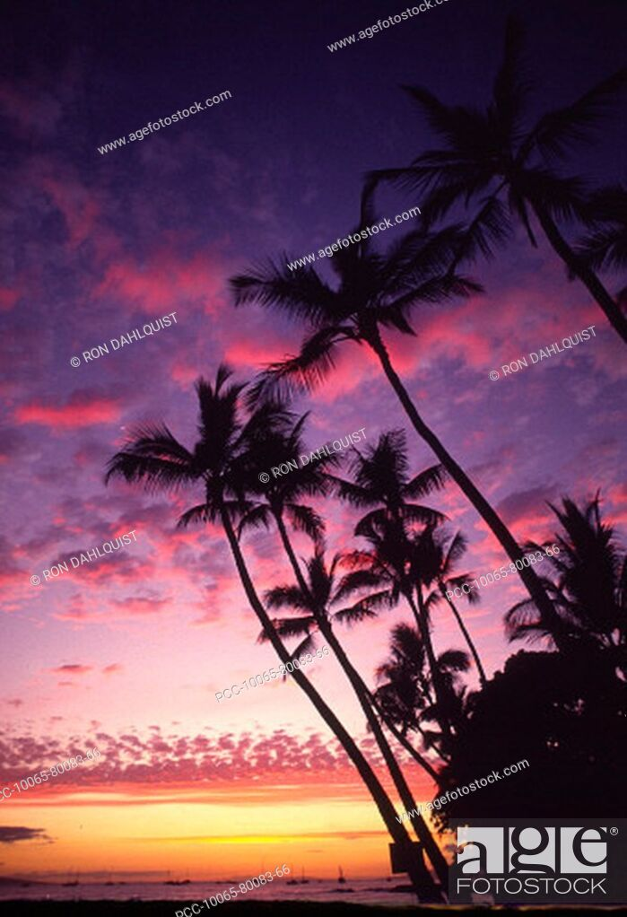 Stock Photo: Palm trees along coastline silhouetted by a colorful sunset sky.