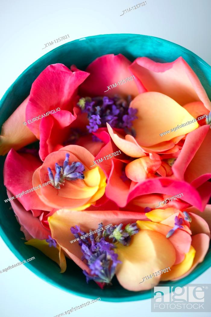 Stock Photo: Flowers in bowl.