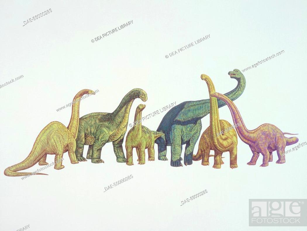 Stock Photo: Palaeozoology - Jurassic Period - Dinosaurs - Cetiosaurus, Camarasaurus, Opisthocoelicaudia, Brachiosaurus, Mamenchisaurus, Diplodocus. Art work.